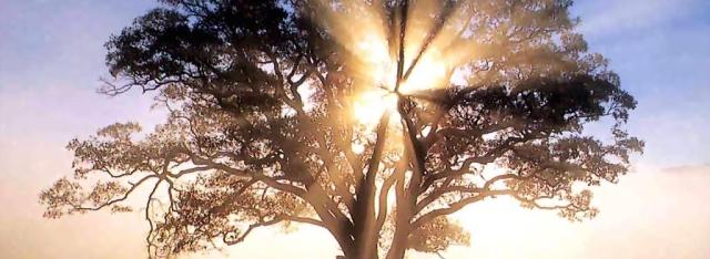 america-oak-tree-1920x2560-versic3b3n-2